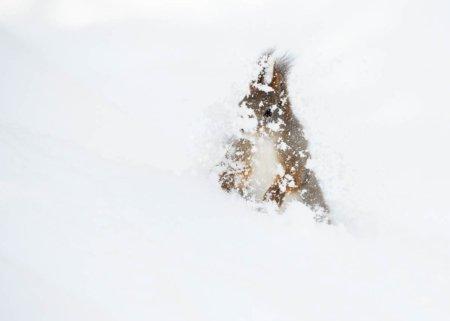 Ekorn i snø